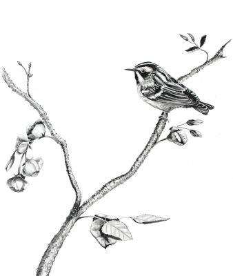100-317 black and white warbler 8x10.jpg