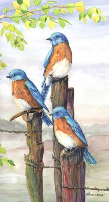 193 western bluebirds 2008 crop sm.jpg