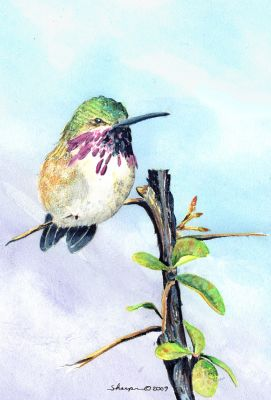 196 hummingbird in buckthorn with bg (2).jpg