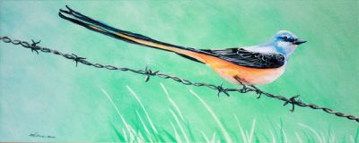 100-221 split tail flycatcher