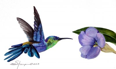 231 tropical hummingbird sm.jpg