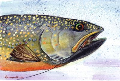 300-383 Brown Trout on Nymph