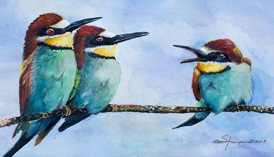 100-240 bee eaters