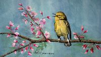 100-252 yellow warbler in cherry blossoms