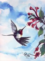 100-114 Ruby throat hummingbird