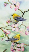 100-190 Prothonotary Warbler