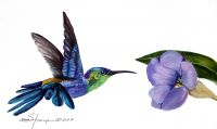 100-231 Tropical Hummingbird