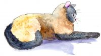 200-278 Siamese Cat