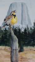 100-245 Meadowlark at Devils Tower