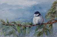 100-251 chickadee in white pine