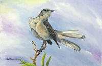 100-275 Northern Mockingbird