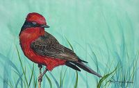 100-254 vermillion flycatcher