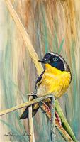 100-244 Yellow Throat